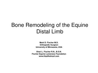 Bone Remodeling of the Equine Distal Limb