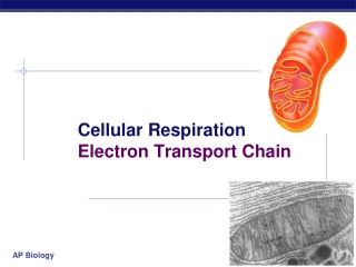 Chapter  9.  Cellular Respiration  Electron Transport Chain