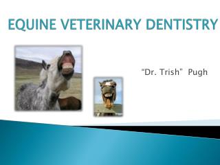 EQUINE VETERINARY DENTISTRY