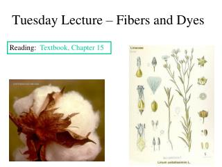 Tuesday Lecture – Fibers and Dyes