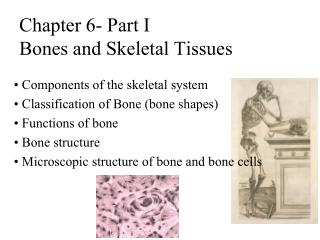 Chapter 6- Part I  Bones and Skeletal Tissues
