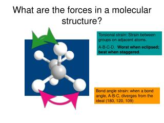 What are the forces in a molecular structure?