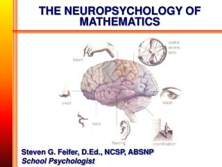 THE NEUROPSYCHOLOGY OF MATHEMATICS