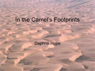 In the Camel's Footprints
