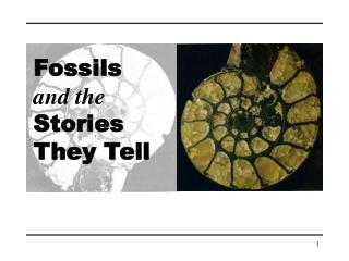 Fossils and the Stories They Tell