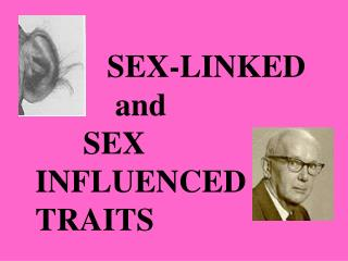 SEX-LINKED               and        SEX    INFLUENCED TRAITS