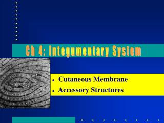 Cutaneous Membrane   Accessory Structures