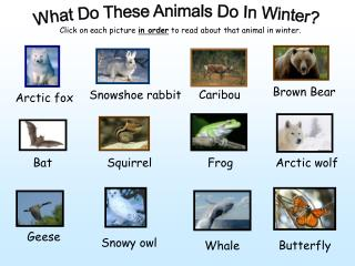 What Do These Animals Do In Winter?