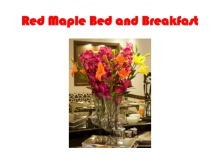 Delhi Bed & Breakfast, Bed & Breakfast New Delhi, B&B Delhi