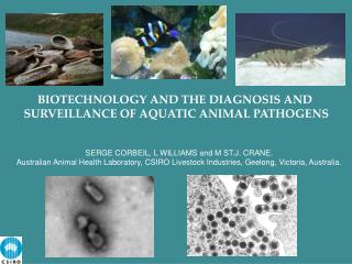 BIOTECHNOLOGY AND THE DIAGNOSIS AND  SURVEILLANCE OF AQUATIC ANIMAL PATHOGENS
