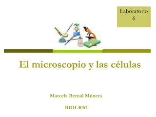 Marcela Bernal Múnera BIOL3051