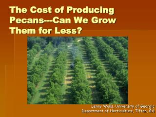 The Cost of Producing Pecans---Can We Grow Them for Less?