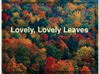 Lovely, Lovely Leaves