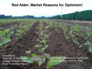 Red Alder; Market Reasons for Optimism!