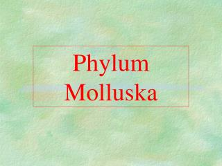 Phylum Molluska
