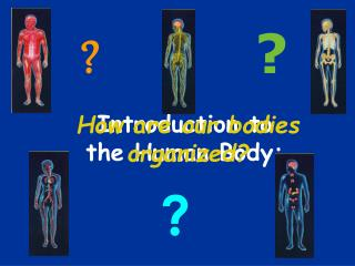 Introduction to the Human Body: