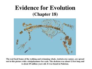 Evidence for Evolution Chapter 18