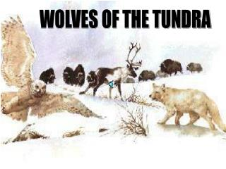 WOLVES OF THE TUNDRA