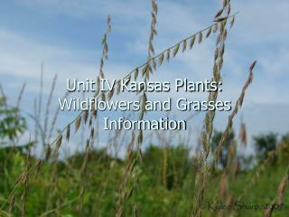Unit IV Kansas Plants: Wildflowers and Grasses Information