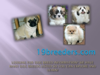 Tips to Choose the Best Puppies for Sale Atlanta Georgia