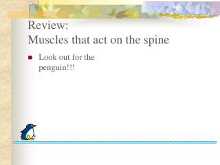 Review: Muscles that act on the spine