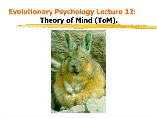 Evolutionary Psychology Lecture 12:    Theory of Mind ToM.