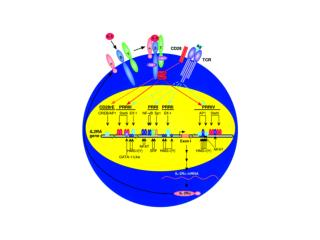 TNF superfamily TNF: produced by macrophages, monocytes, lymphocytes, fibroblasts upon inflammation, infection, injury,
