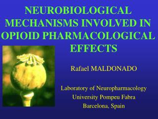 NEUROBIOLOGICAL MECHANISMS INVOLVED IN OPIOID PHARMACOLOGICAL         		EFFECTS