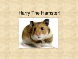 Harry The Hamster!