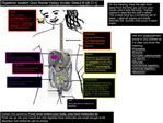 Digestive system Quiz Name Hailey Andler Date3-6-06 Cl C