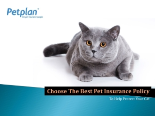 Choose the best Pet insurance policy to help protect your ca