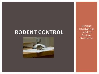 rodent control: serious infestations lead to serious problem