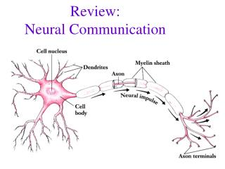 Review: Neural Communication