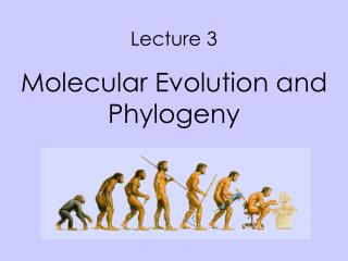 Lecture 3  Molecular Evolution and Phylogeny