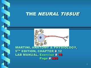 THE  NEURAL TISSUE MARTINI, ANATOMY & PHYSIOLOGY, 9 TH  EDITION, CHAPTER  #  12 LAB MANUAL,  Exercise # 18 Page #  2