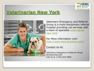 Brooklyn Veterinary Services - Find A Veterinarian in Brookl