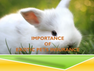 Importance of Insurance for Exotic Pets
