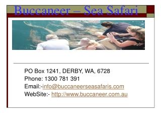 Sea Safari