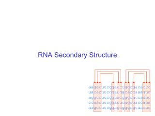 RNA Secondary Structure