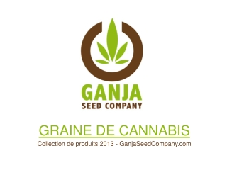 Graine de Cannabis