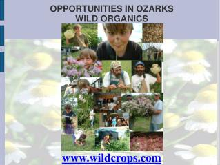 OPPORTUNITIES IN OZARKS  WILD ORGANICS