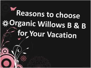 reasons to choose organic willows b & b for your vacation