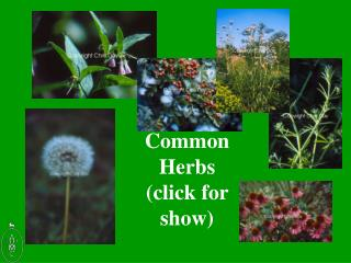 Common Herbs click for show