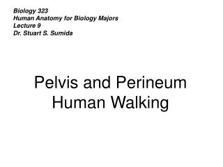 Biology 323 Human Anatomy for Biology Majors Lecture 9 Dr. Stuart S. Sumida