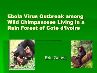 Ebola Virus Outbreak among Wild Chimpanzees Living in a Rain Forest of Cote d Ivoire