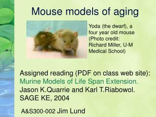 Mouse models of aging