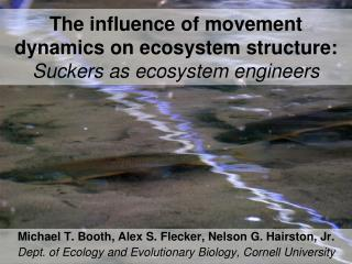 The influence of movement dynamics on ecosystem structure:  Suckers as ecosystem engineers