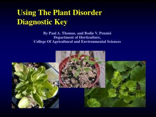 Using The Plant Disorder Diagnostic Key