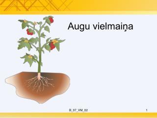 Augu vielmaiņa