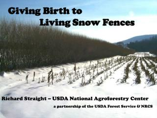 Giving Birth to Living Snow Fences